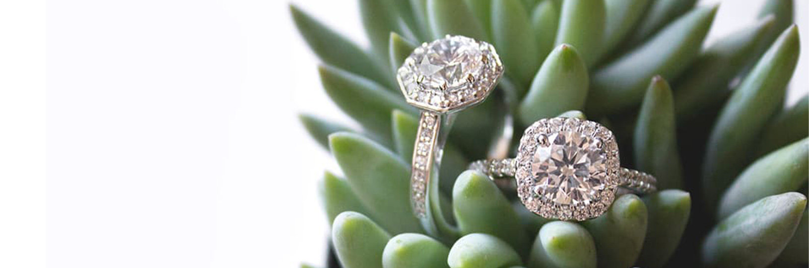 Two dazzling engagement rings placed upon a succulent